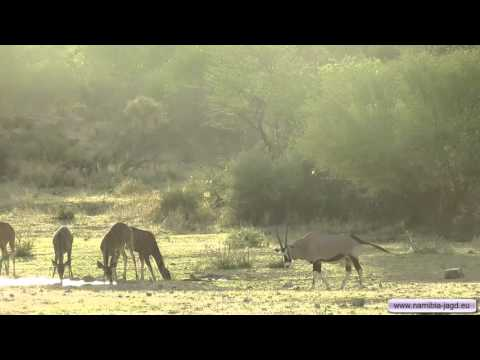 Jagdreise In Der Nähe Von Omaruru. Sonderangebote