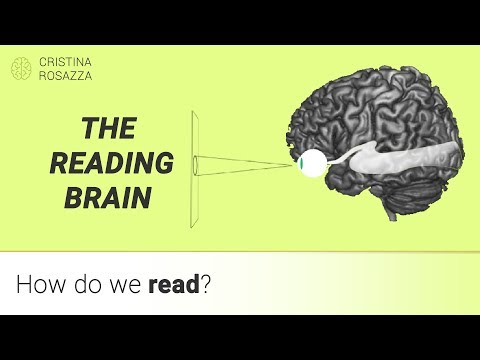 How do we read? Our brain's multilingual expertise - Pillola #5 ENGLISH