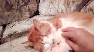 Кошка засыпает. Спать пора.