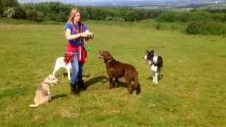 Flexi Leads In Dog Training
