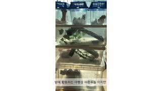파충류 VLOG - 모찌들 일광욕
