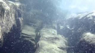 西表島の川・ツバサハゼ、ナンヨウボウズハゼ(水中撮影)