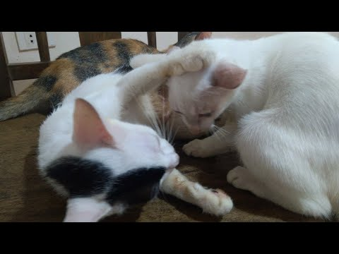 baby cats and mommy cats – Stray Kitten Picks A Dog As Her Mom | The Dodo Cat Crazy