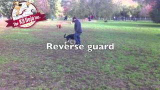 K9dojo Hand Signals: Reverse Heel Dog Training Epic Must See