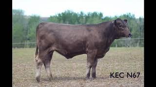 Glenliam Farm Grey lady G46 52B2F5DC DAEB 4BCC 9A56 14A63BEF8FD4