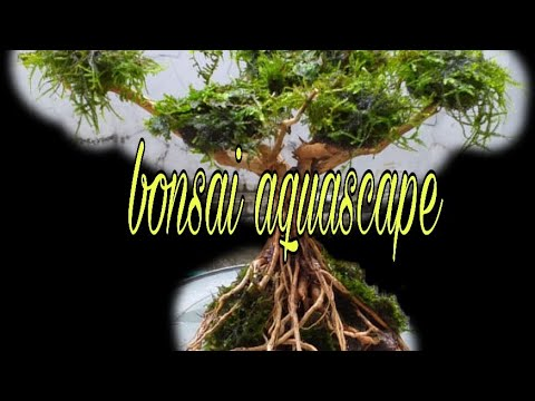 Membuat bonsai aquascape - YouTube