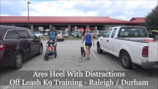 Ares (5 Month Old Husky Puppy) Before And After Video - Raleigh Durham Dog Training