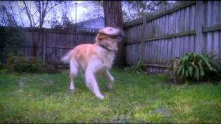 Melbourne Dog Trainer | Paw Habits