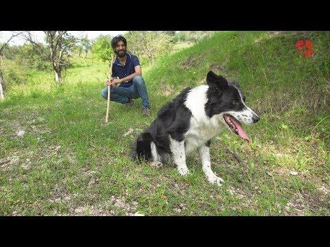 CS L'esperienza di Manuel con i suoi Border Collie da Sheepdog