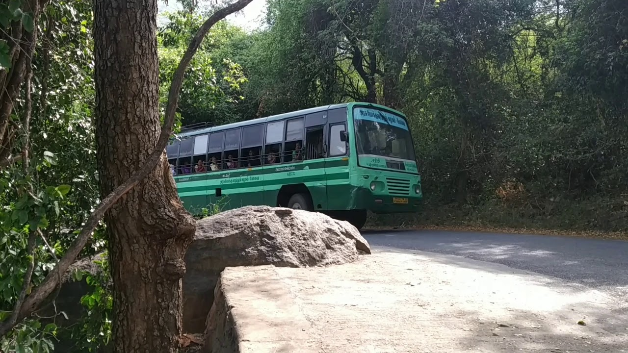 SATHYAMANGALAM TIGER RESERVE | ROAD SHOW | KALIRADUM KADU RAJAN | TRAVEL & EVENT |  KADAMBUR HIL