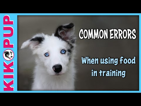 Common Newbie Errors When Using Food to Train Dogs and Puppies