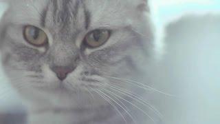 PETA全新治癒系短片 | 陳柏霖等眾星呼籲領養代替買賣