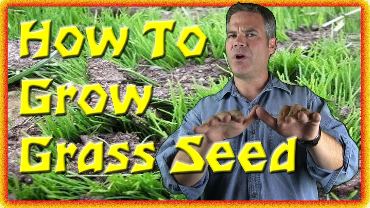 Best way to plant grass seed - Best Way To Plant Grass Seed 13