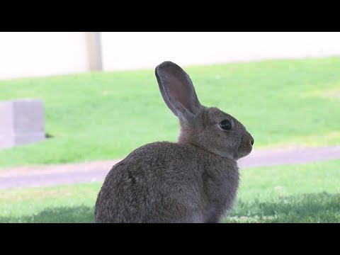 Rescue group fears for safety of bunnies