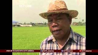 Thailand's Rice Farmers Join Anti-Government Protesters