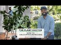 How To Encourage Branching | The Plant Doctor