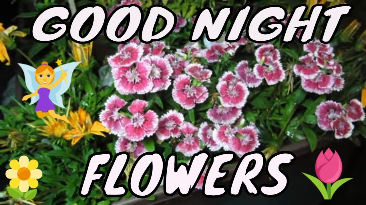 Good Night Flowers Youtube