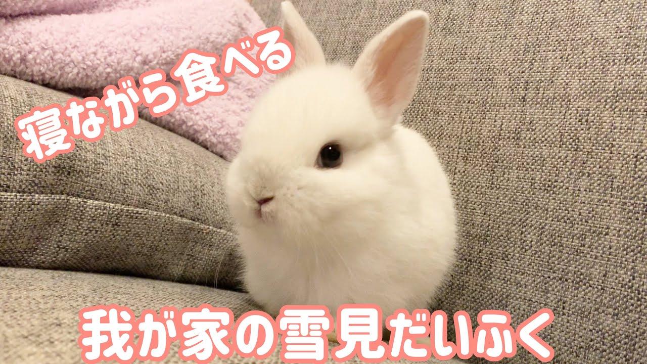 #48 寝ながら食べる子うさぎ?!生後1ヶ月の子うさぎが可愛い! A baby rabbit eating while sleeping? !One-month-old baby is cute!