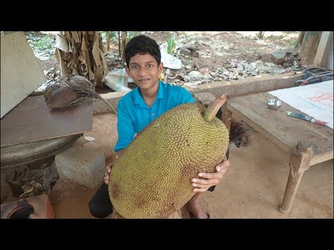 Village food factory/BIG jackfruit chips recipe - jackfruit Recipe Cooking my Family in my village