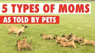 Top 5 Mom Types As Told by Pets