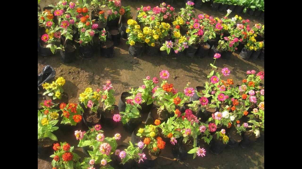 Beautiful flowers at kadiyam nurseries - YouTube