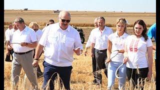 Президент Беларуси продолжает инспектировать ход уборочной кампании