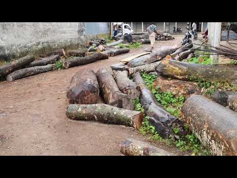 Rain but Working So Hard for Cutting a Lot of Woods।Urgent Buyer Requirement Rainy Day Wood Cutting