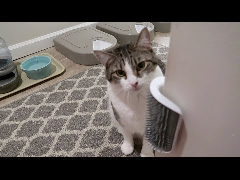 Boo Day 184 - The Self-Groomer, Super Chats, And Mail Time