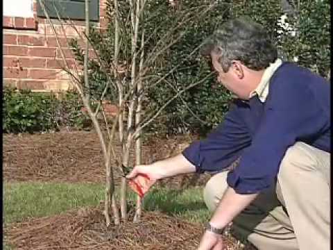 Proper Pruning - MSU Extension Service