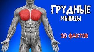 видео Биомеханика мышц