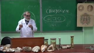 Моллюски. Брюхоногие. Михаил Черняховский