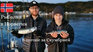 Гонка за скумбрией!! Рыбалка в Норвегии! Морская рыбалка!! Ловля скумбрии, опять четыре сразу!