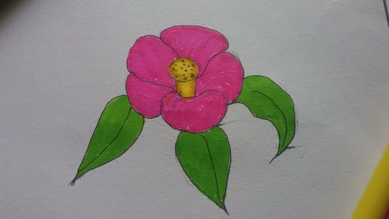How to draw a camellia flower with basic shapes//drawing for beginners//@how to draw step by step