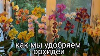 Как мы удобряем наши орхидеи! мои шикарные орхидеи! моя любовь! уход за орхидеями!