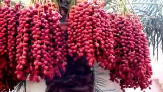 Tomay Porechhe Mone Abar_Music Kishore Kumar Bangla Karaoke Track Sale Hoy Contact Korun
