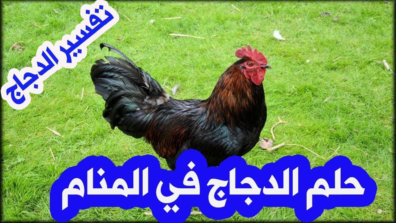 الدجاج في المنام للمتزوجة حلم الدجاج للمتزوجة تفسير الدجاج النيء حلم اكل الدجاج Youtube