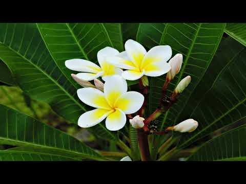Видео: April flowers