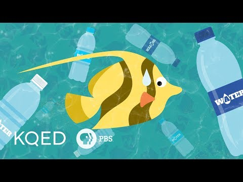Would Banning Plastic Bottles Help or Hurt the Planet?