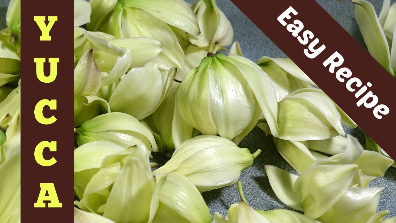 Yucca flower comfort food from a foraging friends family youtube yucca flower comfort food from a foraging friends family izmirmasajfo