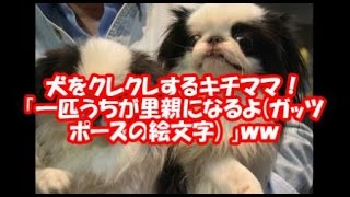 某ドラマで大人気になった犬と同じ種類を2頭ペアで飼っています。 ドラマが...