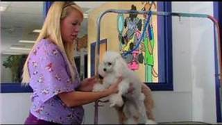 Dog Grooming : How To Groom A Toy Poodle