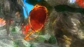 Phim | Thám hiểm đáy đại dương, cảm giác cực mạnh qua phim 4D online.flv | Tham hiem day dai duong, cam giac cuc manh qua phim 4D online.flv