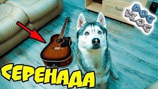 DOGVLOG: ХАСКИ ПОЕТ и ИГРАЕТ НА ГИТАРЕ! Говорящая собака