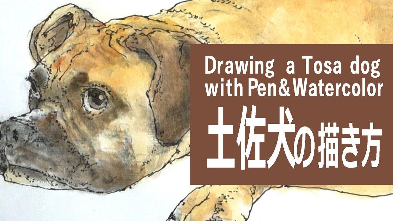水彩絵の具のパステルのイラスト 描き方制作過程土佐犬 How To Draw