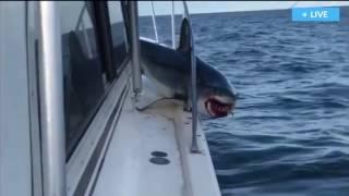 Mancing ikan hiu besar begitu strike Hiu nya Melompat Ke atas Kapal