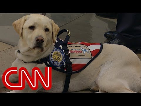President George H.W. Bushs service dog says goodbye for the last time