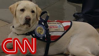 President George H.W. Bush's service dog says goodbye for the last time