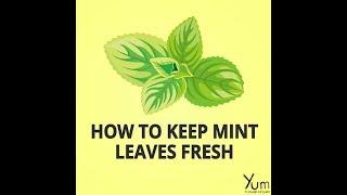 How to Keep Mint Leaves Fresh