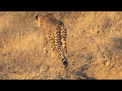 Hannah P2P South Africa Cheeta