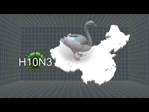 Chinese scientists decipher genetic composition of new H10N8 bird flu virus